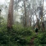 Wandeling in de jungle. De domeinbeheerder waarschuwde voor bavianen zo groot als Marianne. We hebben ze niet gezien. :-)
