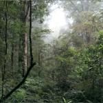 Onze eerste wandeling in de Jungle. Mistig, maar erg mooi.