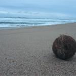 De eerste keer de Indische oceaan gezien! ...en een kokosnoot in het wild. Geen deel van The Big Five, maar toch...