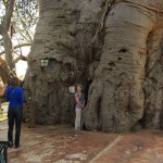 Met z'n allen in de grootste Baobab bar ter wereld