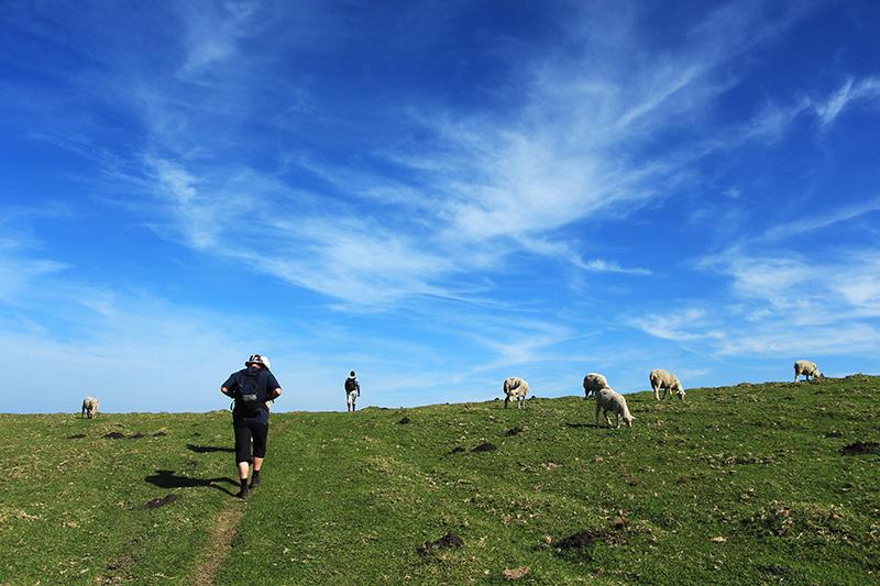 Vaak zijn de wandelpaden gewoon wildsporen die door de schapen en koeien worden uitgesleten.